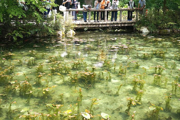 岐阜県のモネの池